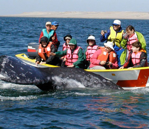 Whale Watching FAQ