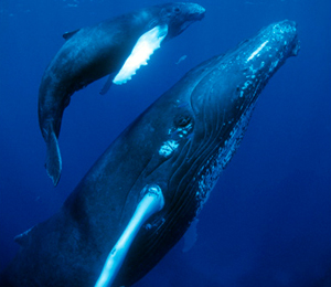Whale Species Info